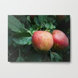 Autumn Apples in the Rain Metal Print