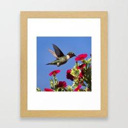 Hummingbird Moment Framed Art Print