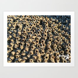 Barnacle City Art Print