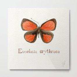 Butterfly - Euselasia erythraea Metal Print