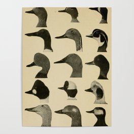 Vintage Duck Heads Poster