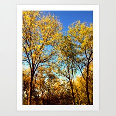 Fall foliage Art Print