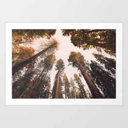 Sequoia Sunset Art Print