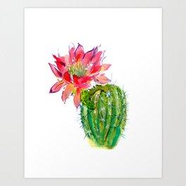 Blooming Dwarf Chin Cacti Art Print