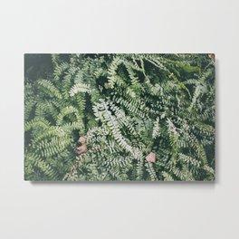 Fern Garden, I Metal Print