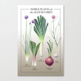 Edible Alliums Canvas Print