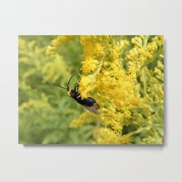 Yellow-Collared Scape Moth on Goldenrod Metal Print