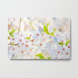 flower photography by Evelyn Metal Print