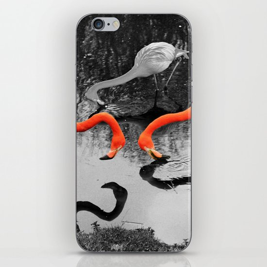 Matthew Cole Photography iPhone & iPod Skin