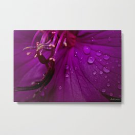 Royal Princess flower macro with water droplets - Floral Photography #Society6 Metal Print