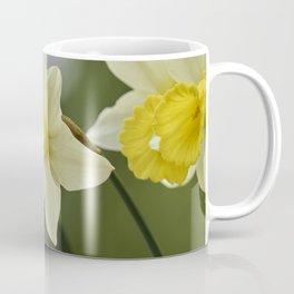 daffodils bloom in spring in the garden Coffee Mug