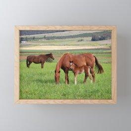 Horse Family Framed Mini Art Print
