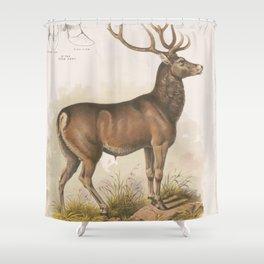 Vintage Illustration of a Round Horned Elk (1872) Shower Curtain