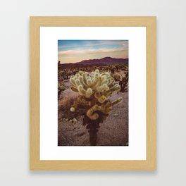 Cholla Cactus Garden VI Framed Art Print