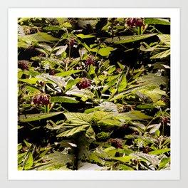 Wild Comfrey & Blackberries.... Art Print