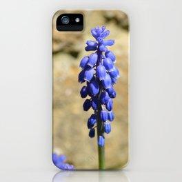 Muscari Grape Hyacinth iPhone Case