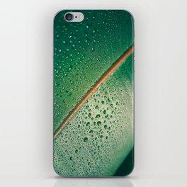 Close Up Of Tropical Succulent Green Leaf iPhone Skin