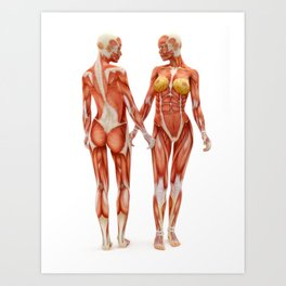 Female muscle system Art Print