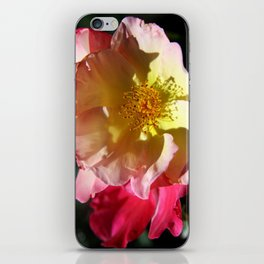 Prettyness Of A Rose iPhone Skin