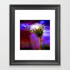 Only a dandelion  Framed Art Print