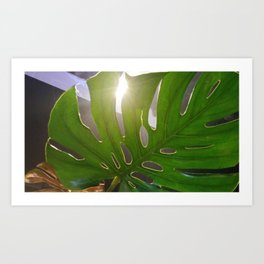 Shining leaf Art Print