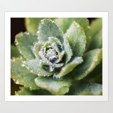 Dew Drop Petals Art Print