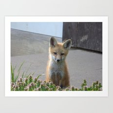 fox XI Art Print