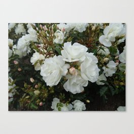 Shield of White Roses Canvas Print