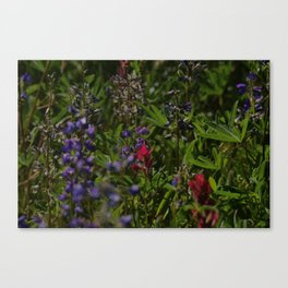 subalpine season Canvas Print