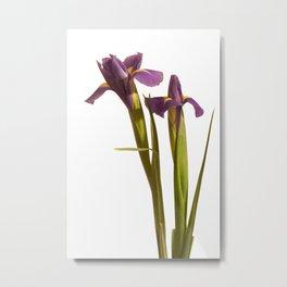 Purple Iris Portrait Metal Print