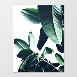 Ficus Elastica #26 #foliage #decor #art #society6 Canvas Print