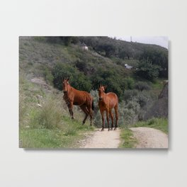 Horses in the countryside. Metal Print