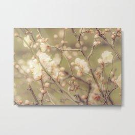 Sakura Flowers, Imperial Palace Park, Tokyo, Japan Metal Print