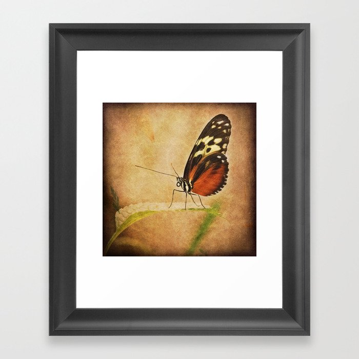 Antique Butterfly Framed Art Print