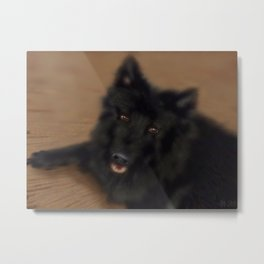 A dog named Bamse Metal Print