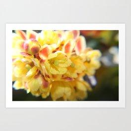 Boxwood Flower Art Print