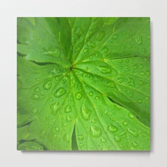 green leaf II Metal Print