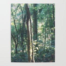 Iguazú Forest  Poster