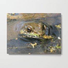 Froggy Eyes Metal Print