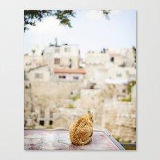 Cat Overlooking Ancient Ruins, Israel Canvas Print
