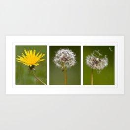 Life Of A Dandelion Art Print