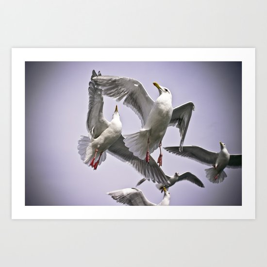 """ The Beauty of Flight "" - Print Art Print"