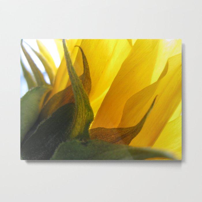 Sunflower 47 Metal Print