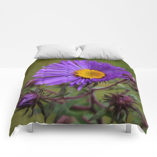 Purple Asters Comforters