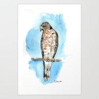 hawk Art Prints featuring Hawk by Elena Sandovici
