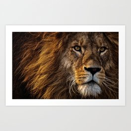 Fierce Proud Lion Predator Art Print