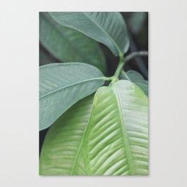 Botanic Touch Bold Canvas Print