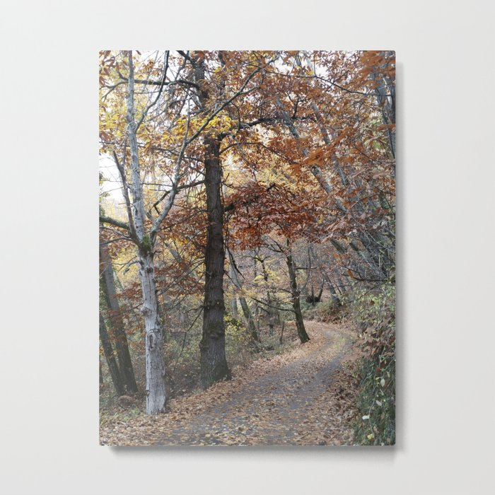 Into the fall woods. Yesterday Metal Print
