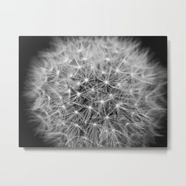 Dandelion flower head composed of numerous small florets Metal Print