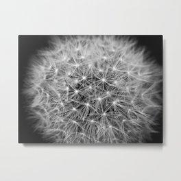 Dandelion flower head composed of numerous small florets Metal Print